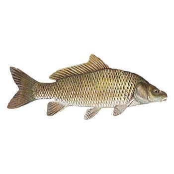 Carp Fishing Solution