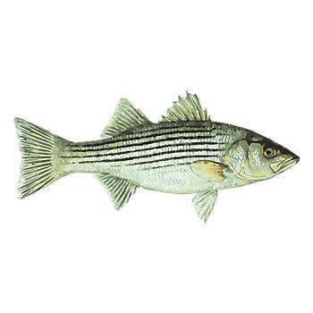 Striper Fishing Solution