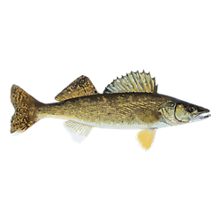 Complete Walleye Fishing Solution